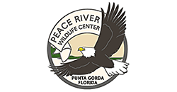 Peace-River-Wildlife